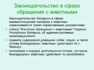 За жестокое обращение с животными статья в беларуси