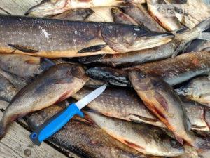 Запреты рыбной ловли в карелии