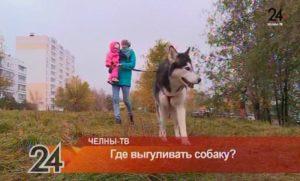 Выгул собак закон 2020 смоленск