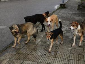 Отлов собак в москве куда обращаться
