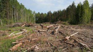 Вырубка лесов в россии законы