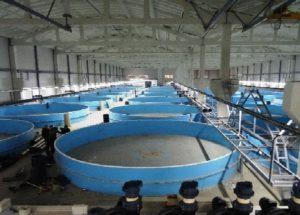 Оборудование для выращивания форели в домашних условиях
