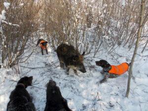 Зимняя охота сроки