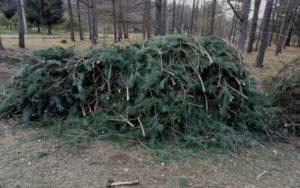 Можно ли рубить лапник в лесу