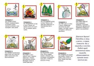 Правила поведения и меры безопасности человпека в лесу