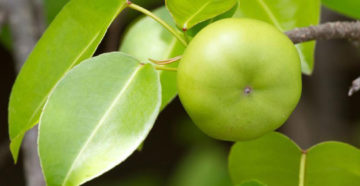 Отравленное дерево дает отравленные плоды