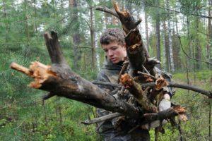 Можно ли теперь пилить сухостой в лесу